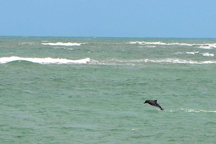 Praia de Pipa Private Transfer from Hotels Natal, Natal, BRASIL