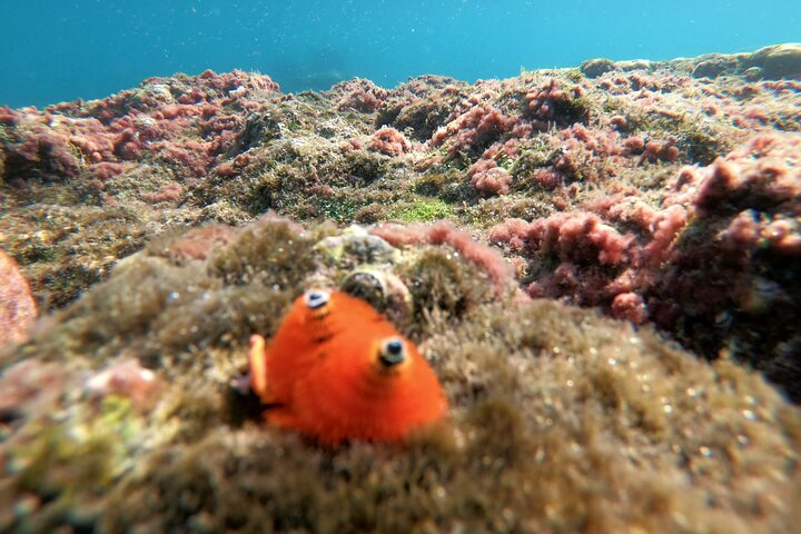 PRIVATE-Snorkelling at Coral Mountain & U-Turn reef in the early morning, Phu Quoc, VIETNAM