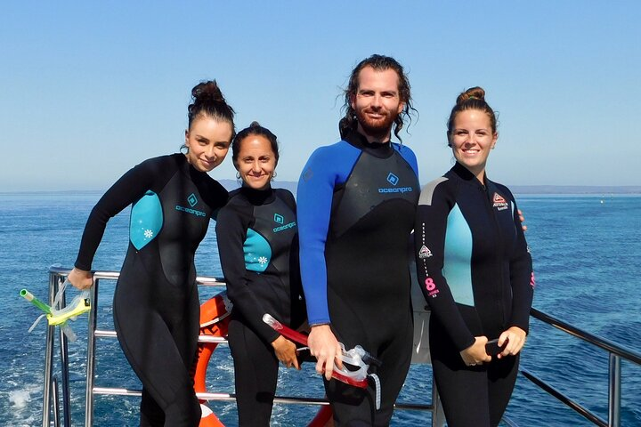 2 hour Snorkel with the Seals, Peninsula de Mornington, AUSTRALIA