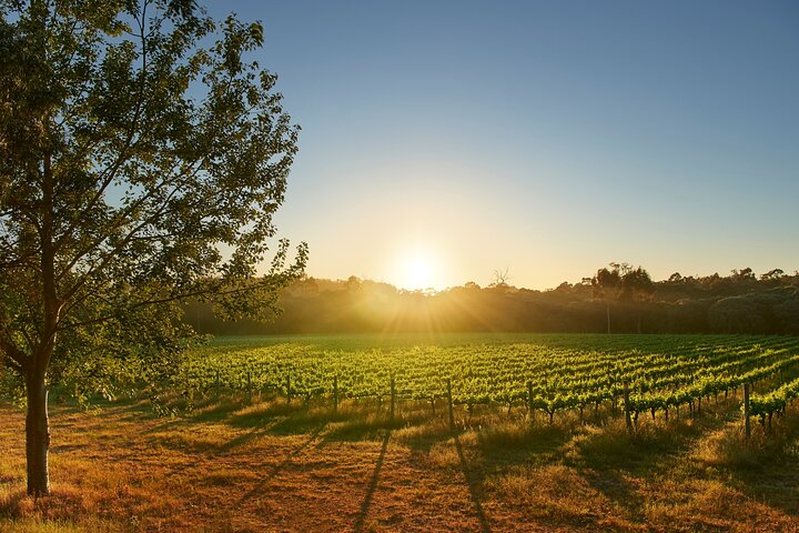 Private Barrel Hall Wine Tasting in the Margaret River Region, Busselton, AUSTRALIA