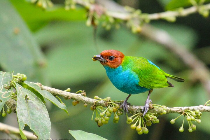 Birdwatching Tour in Via Sigsig,Chiguinda from Cuenca, Cuenca, ECUADOR