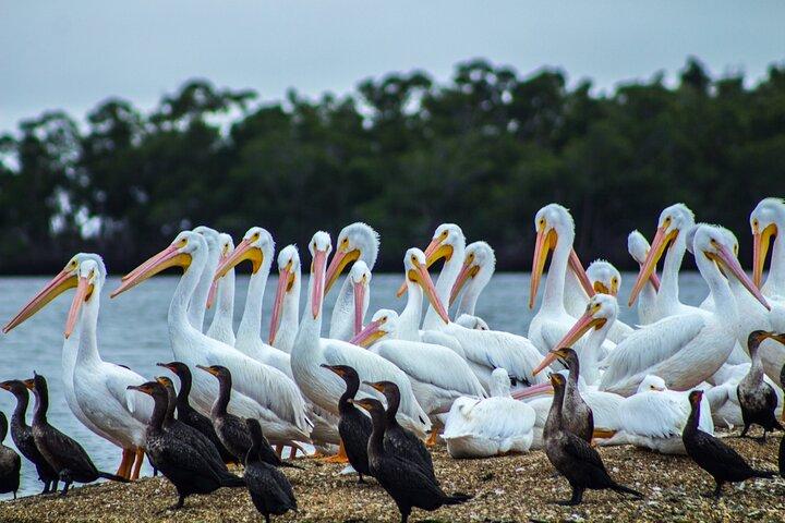 Private or Small Group Motorboat Eco Tour of the Everglades, Naples, FL, ESTADOS UNIDOS
