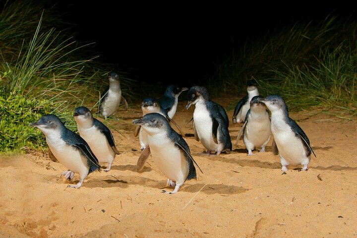 2 Day Exclusively Private Tour Of Phillip Island & The Penguin Parade, Melbourne, AUSTRALIA