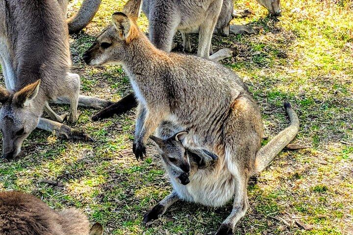 Wildlife Waterfalls and Wine Day Tour from Sydney, Sidney, AUSTRALIA
