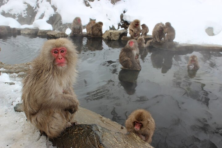 See Snow Monkeys on a Private Day Trip from Tokyo by Bullet Train, Tokyo, JAPON