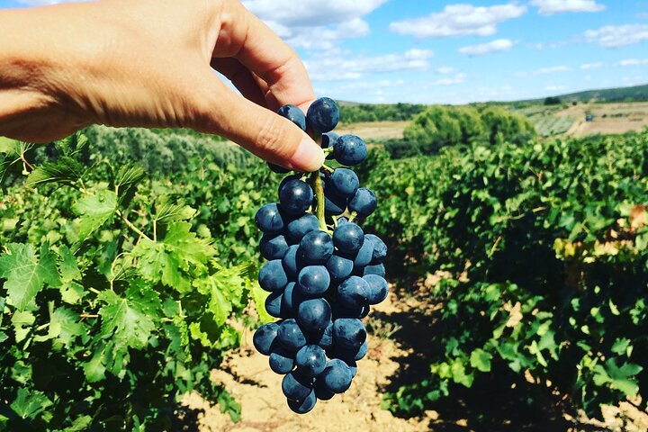 Private tour: Exclusive Wine Tour in Languedoc from Montpellier, Montpellier, FRANCIA