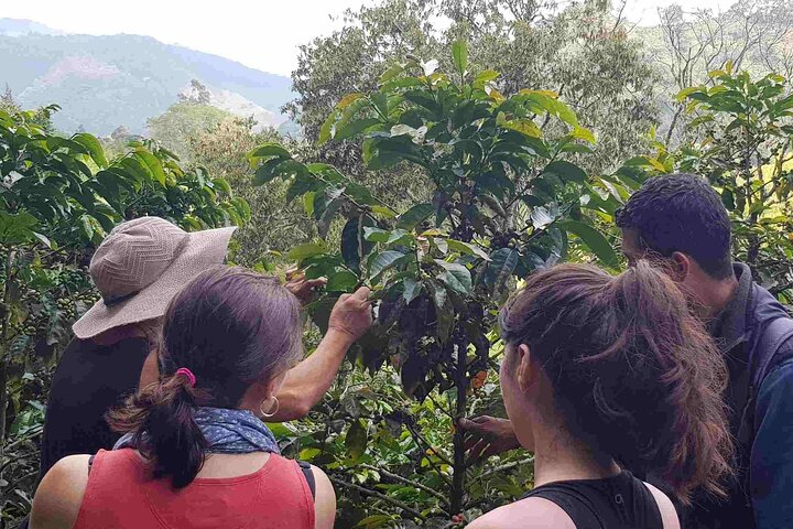 5 Day Coffee Culture Experience, Pereira, COLOMBIA