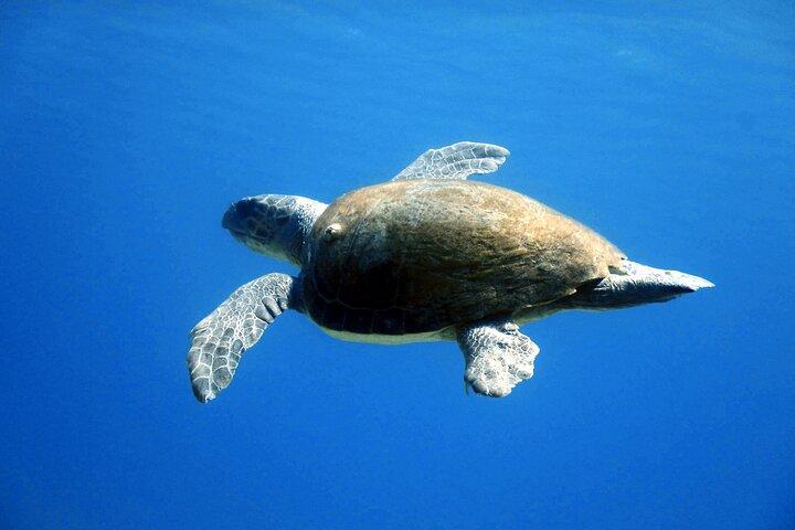 Qualified Diver 1 Tank Dive in Mykonos, Miconos, GRECIA