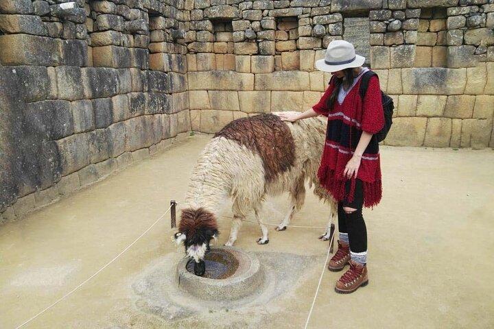 Excursão guiada particular de dia inteiro para Machu Picchu saindo de Cusco, Cusco, PERU