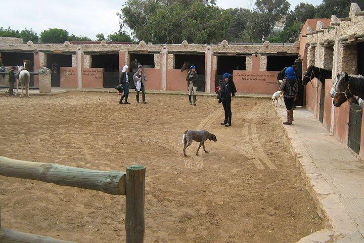 3 hours horse riding at Essaouira, Esauira, MARRUECOS