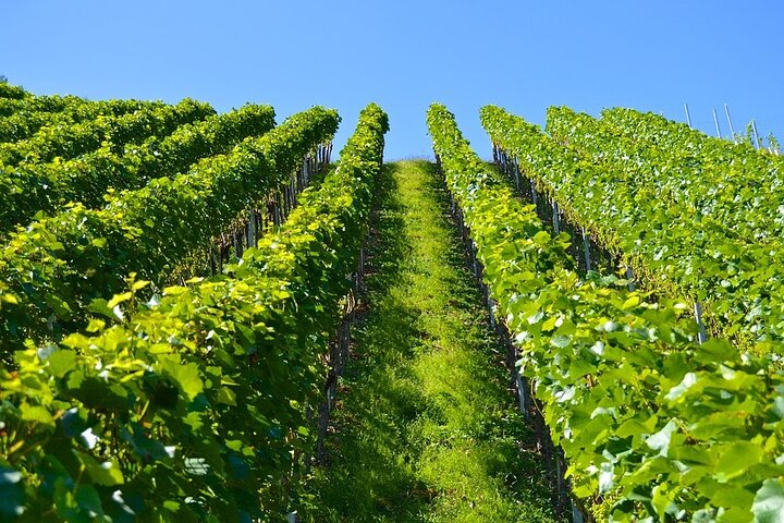Azuga wine tasting on a day trip from Brasov, Brasov, RUMANIA