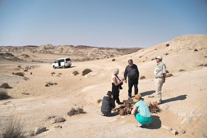 Welwitschia Tour from Swakopmund, Swakopmund, NAMIBIA