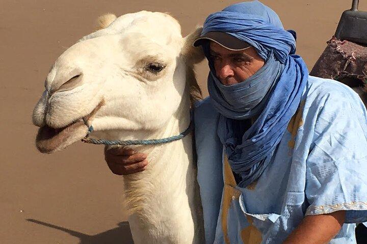 3-hour Dromedary Ride in Essaouira, Esauira, MARRUECOS