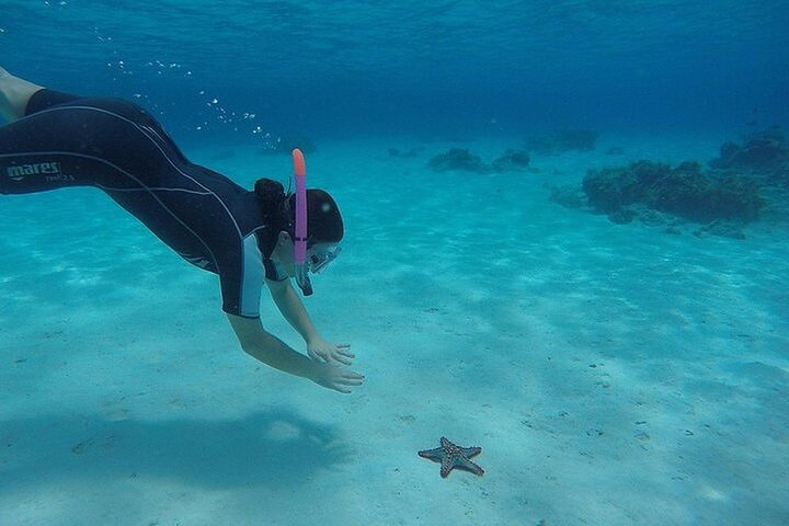 Full-day Dhow Cruise to Mnemba Island reef for Snorkeling with Lunch, Zanzibar, TANZANIA