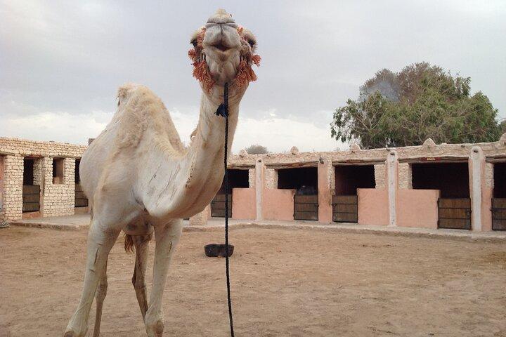 3-hour Dromedary Ride in Essaouira with Diner and Overnight, Esauira, MARRUECOS