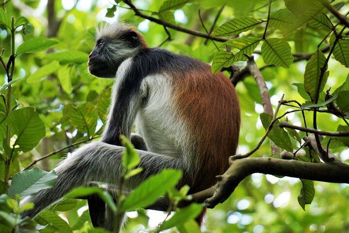 Jozani Forest Tour, Zanzibar, TANZANIA