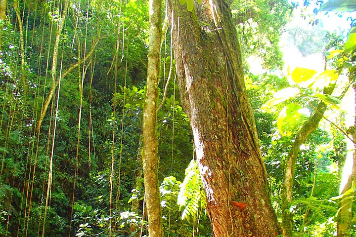 Cloud Forest Wildlife Hike 8:30am (Minimum of 3 people per booking is required), Boquete, PANAMA