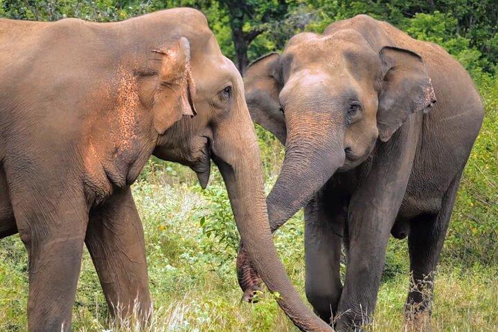 Sri Lanka 7 Days Sightseeing Tour Package, Kandy, Sri Lanka