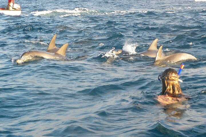 Dolphin Tour & Jozany Forest Snorkeling Sea Trip - Zanzibar, Dar es Salaam, TANZANIA