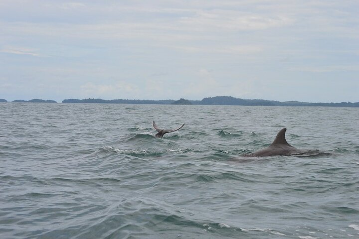Whale Watching (July 15 to Oct.15) Island Tour in the Gulf of Chiriqui 3 minimum, Boquete, PANAMA