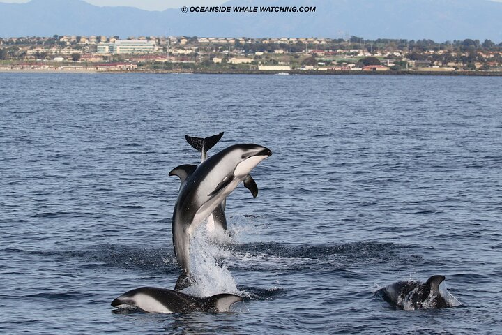 Shared Two-Hour Whale Watching Tours from Oceanside, CA, Carlsbad, CA, ESTADOS UNIDOS