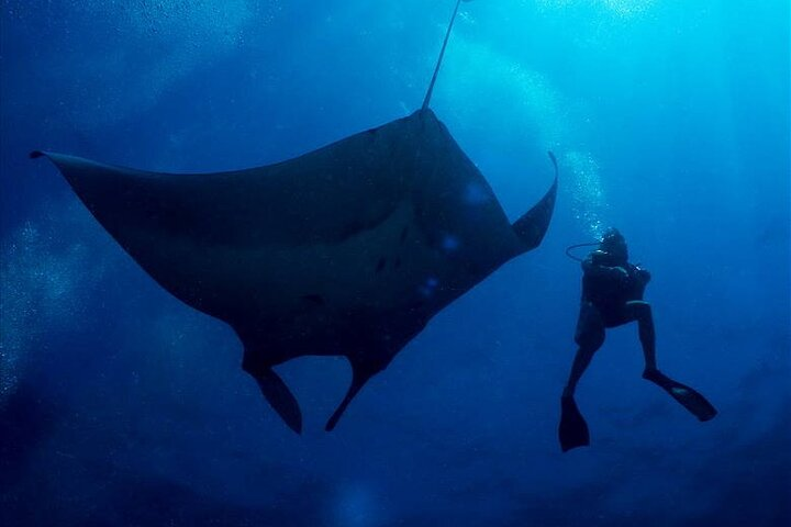2-Day Similans Scuba Diving from Phuket, Khao Lak, TAILANDIA