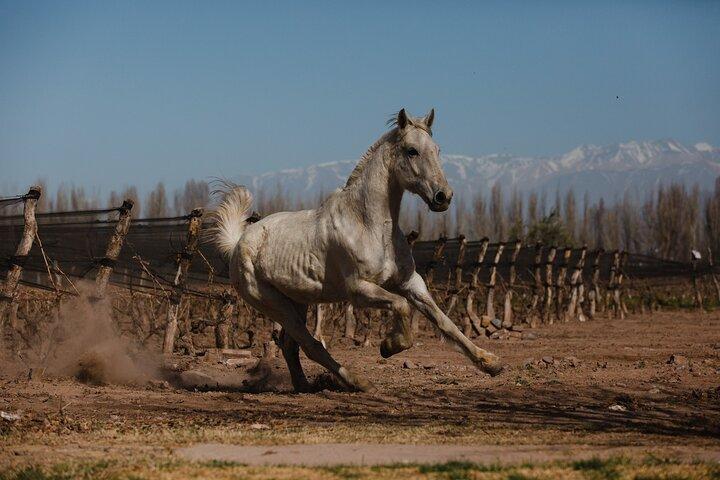Cabalgata Full Day, Mendoza, ARGENTINA