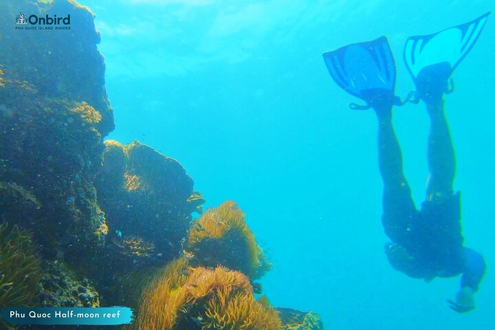 OnBird - [PRIVATE CHARTER] SNORKELING To Explore HALF-MOON REEF & CORAL MOUNTAIN, Phu Quoc, VIETNAM