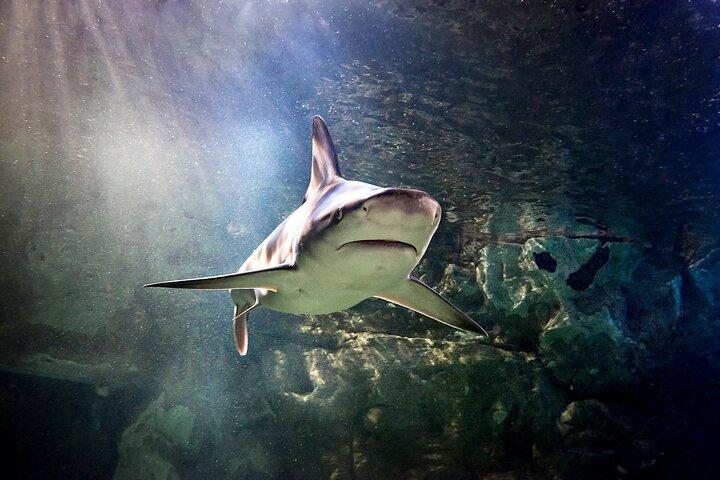 SEA LIFE Orlando Aquarium, Orlando, FL, ESTADOS UNIDOS