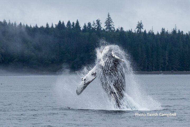 Whales, Wildlife and Culture, Isla de Vancouver, CANADA