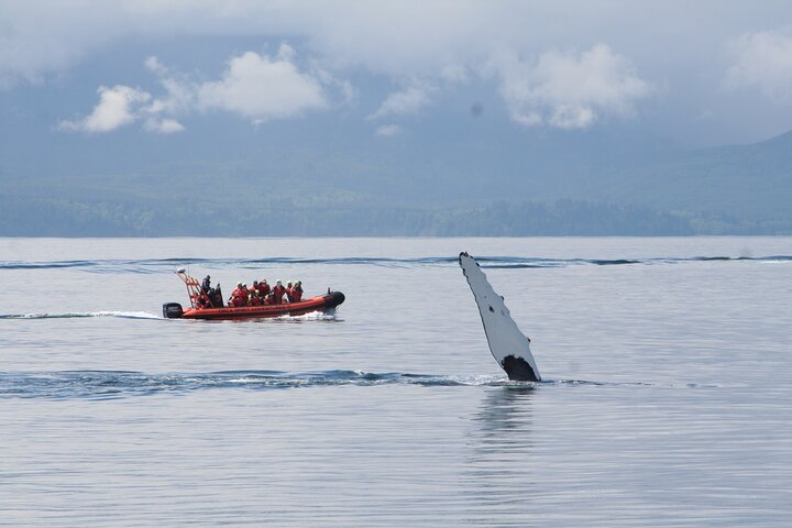 Private Zodiac Whale Watching Tour from Victoria, Isla de Vancouver, CANADA