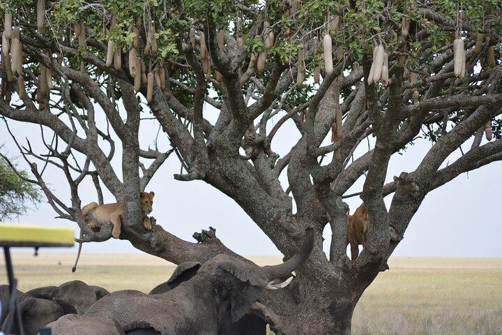 Full-Day Private Serengeti National Park Safari with Breakfast, Zanzibar, TANZANIA
