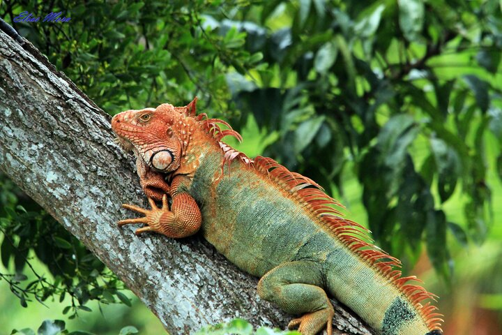 Manuel Antonio National Park Tour with pick up included, Quepos, COSTA RICA