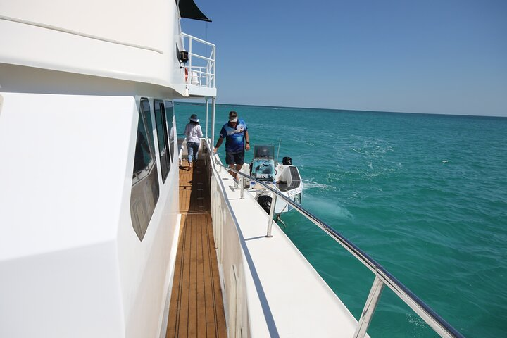 Snubfin Dolphin Eco Cruise from Broome, ,