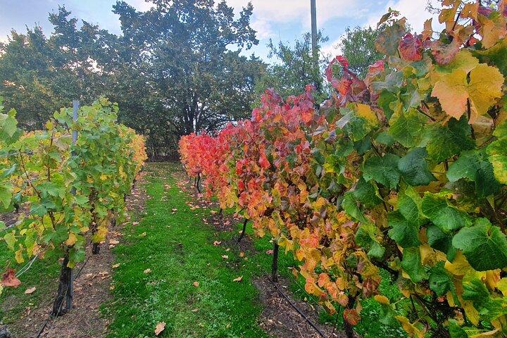 7- 8 Hour StelaVino Guided Wine Tours From Hobart, Hobart, AUSTRALIA
