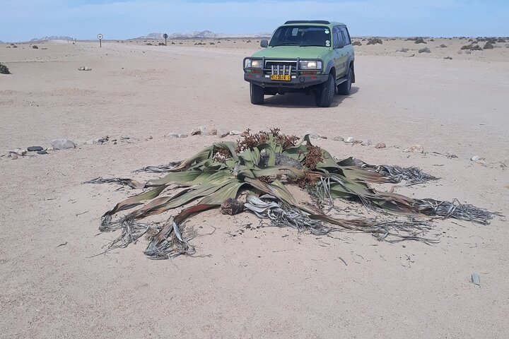 Sandwich harbour and Welwitschia Tour, Swakopmund, NAMIBIA