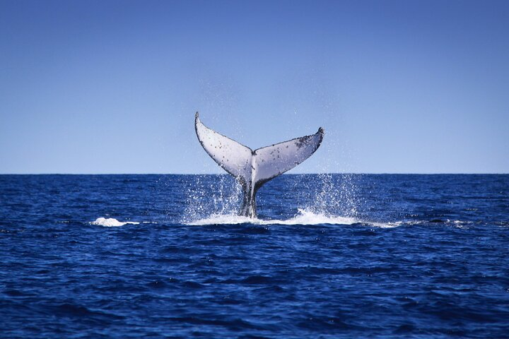 4-Hour Whale Watching Sunset Cruise in Broome, ,