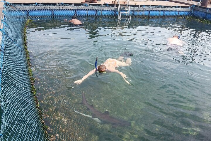 Swim With The Amazing Sharks and Fishes at Ocean Club Bali, ,