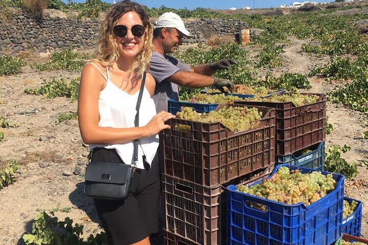 Small group-Santorini Wine Stories by locals, ,