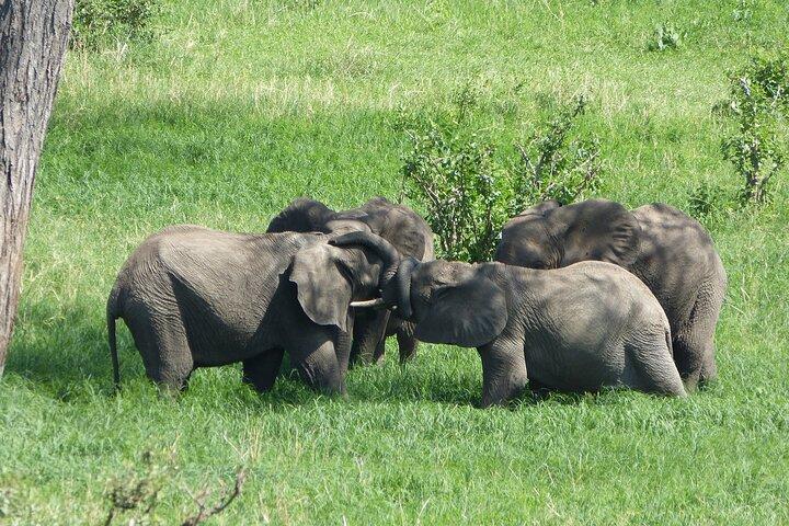 Full-Day Private Safari of Mikumi National Park, Zanzibar, TANZANIA