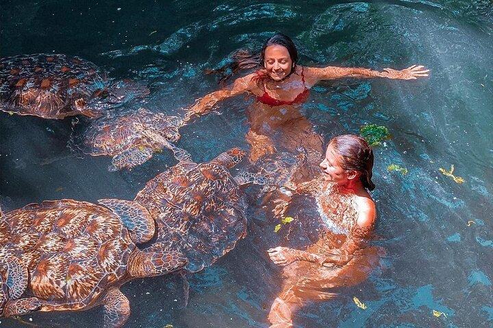 Swimming with turtles Zanzibar, Zanzibar, TANZANIA