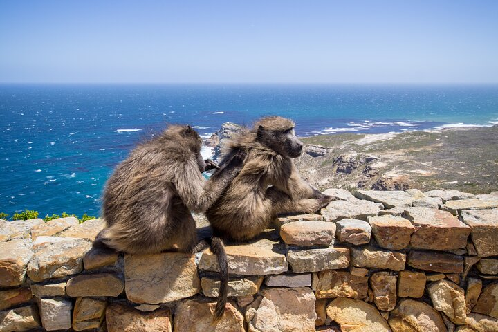 Table Mountain, Boulder's Penguins & Cape Point Private Tour from Cape Town, Cape Town, South Africa