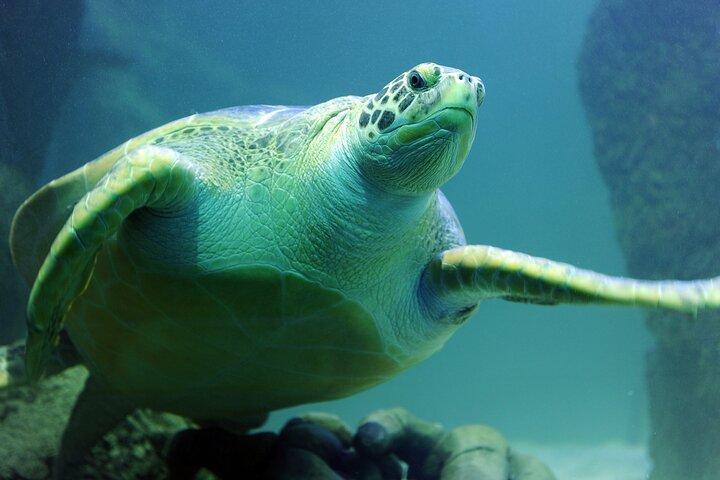 SEA LIFE Michigan Aquarium Admission Ticket, Detroit, MI, ESTADOS UNIDOS