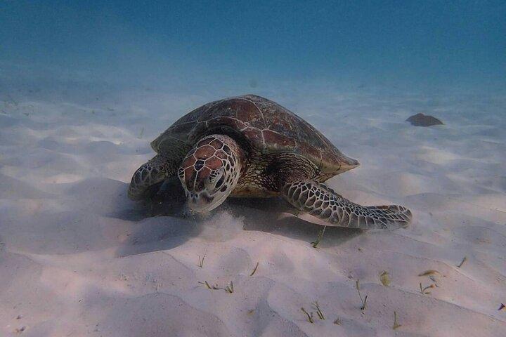 Similan Islands Snorkeling Tour By Sea Star Andaman From Khao Lak, ,